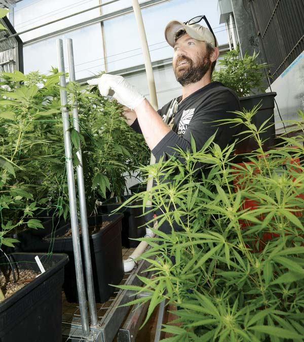 Christopher Cole, Maui Grown Therapies director of product development